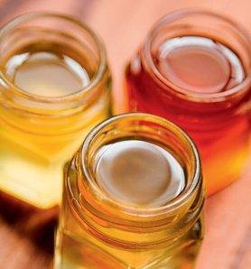 Degustação de mel de abelhas nativas
