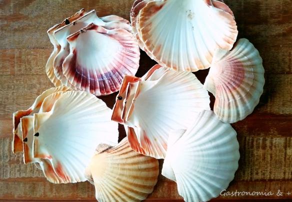 Uma coleção de conchas que fui adquirindo através dos tempo. Linda!