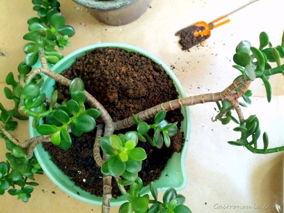 Posicione a planta centradamente no vaso e complete com terra, pressionando com cuidado. Eu usei uma mistura de terra e humus de minhoca.